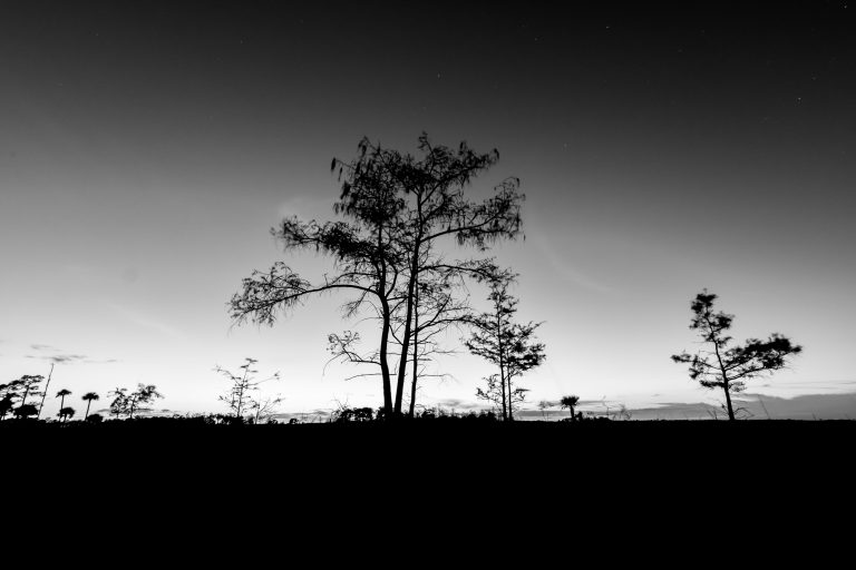 A Cypress Night